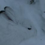 Skärmavbild 2014-01-26 kl. 16.35.01