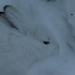 Skärmavbild 2014-01-26 kl. 16.35.03